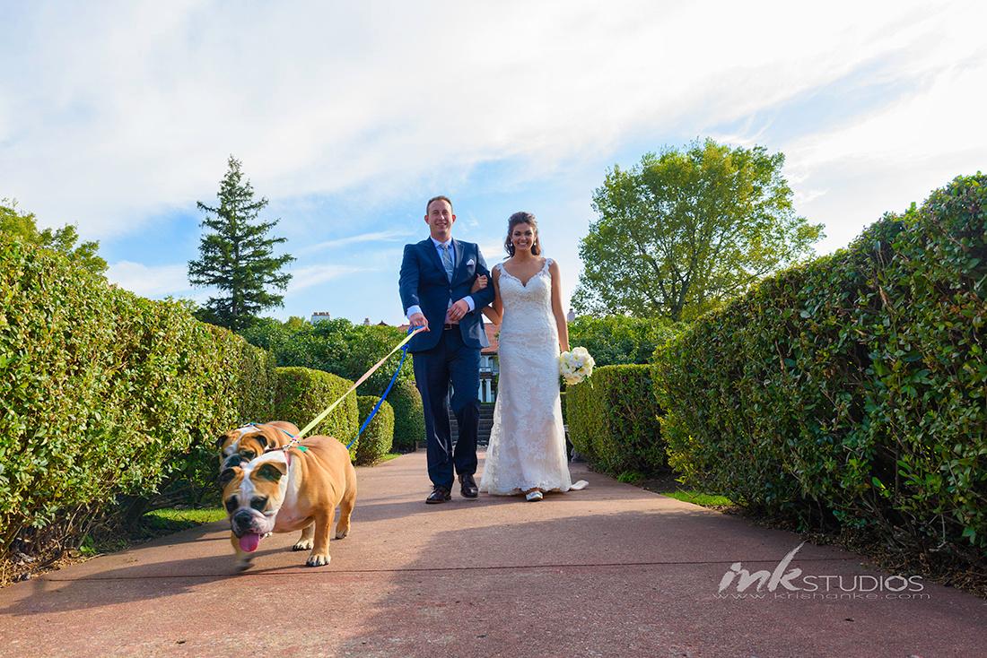 Wedding Bull Dogs